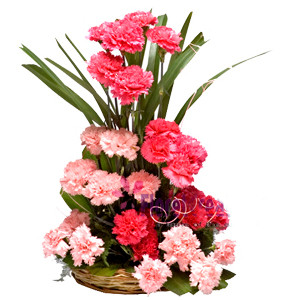 Basket Arrangement Of 25 Pink Carnation