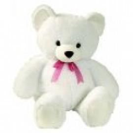 White Teddy