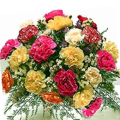 Mix Carnation